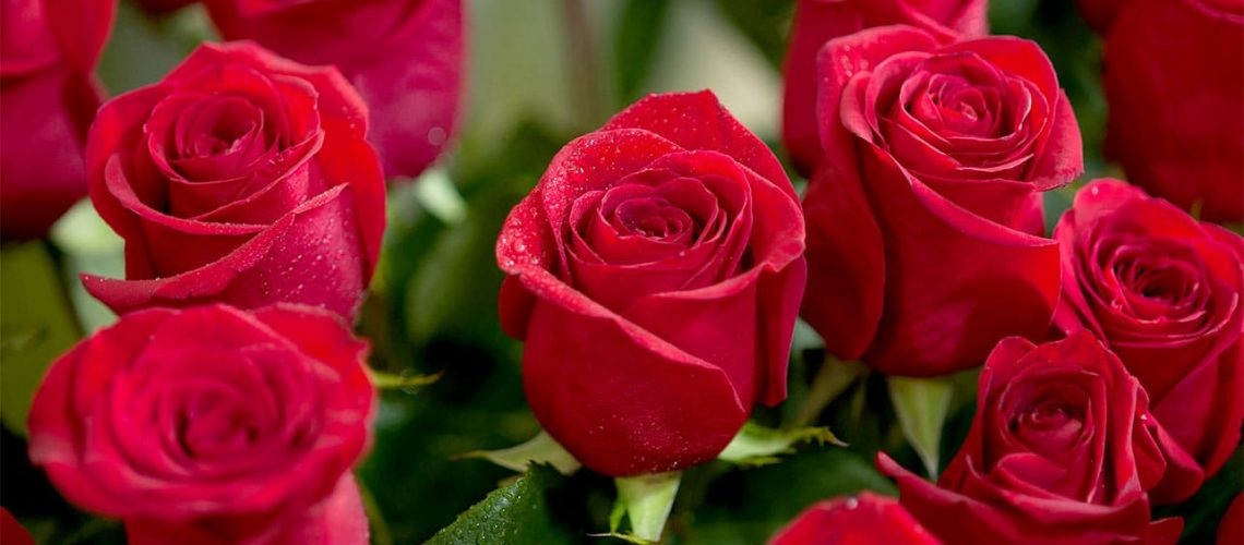 6915_Top-25-Most-Beautiful-Red-Roses