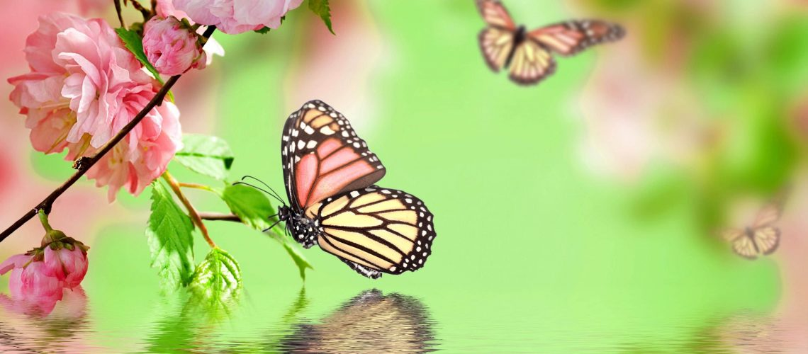Butterfly-Wallpaper-Ch48b