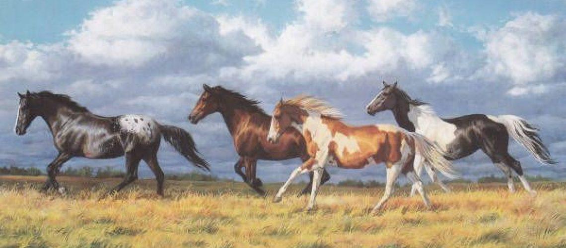 bdt-chris-cummings-horses-pinterest-horses-running