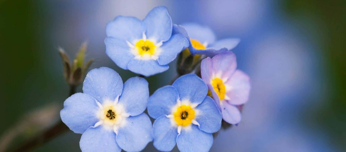 homelife-7-most-beautiful-blue-flowers-best-blue-flowers-names-for-your-beauty-garden-decoration-blue-flowers-with-names-blue-and-white-flowers-names-blue-flowers-and-their-names-blue
