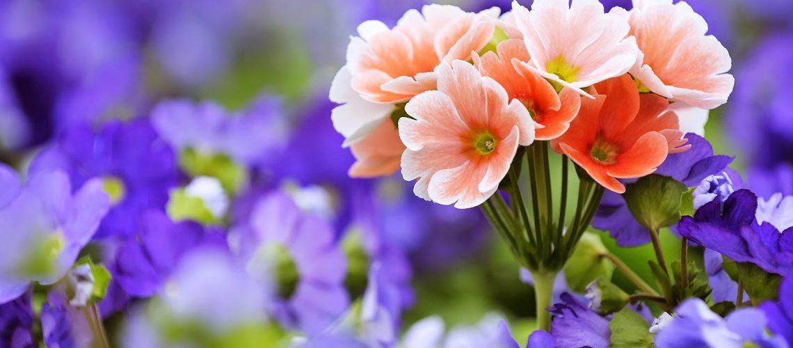 wallpaper-of-beautiful-flowers